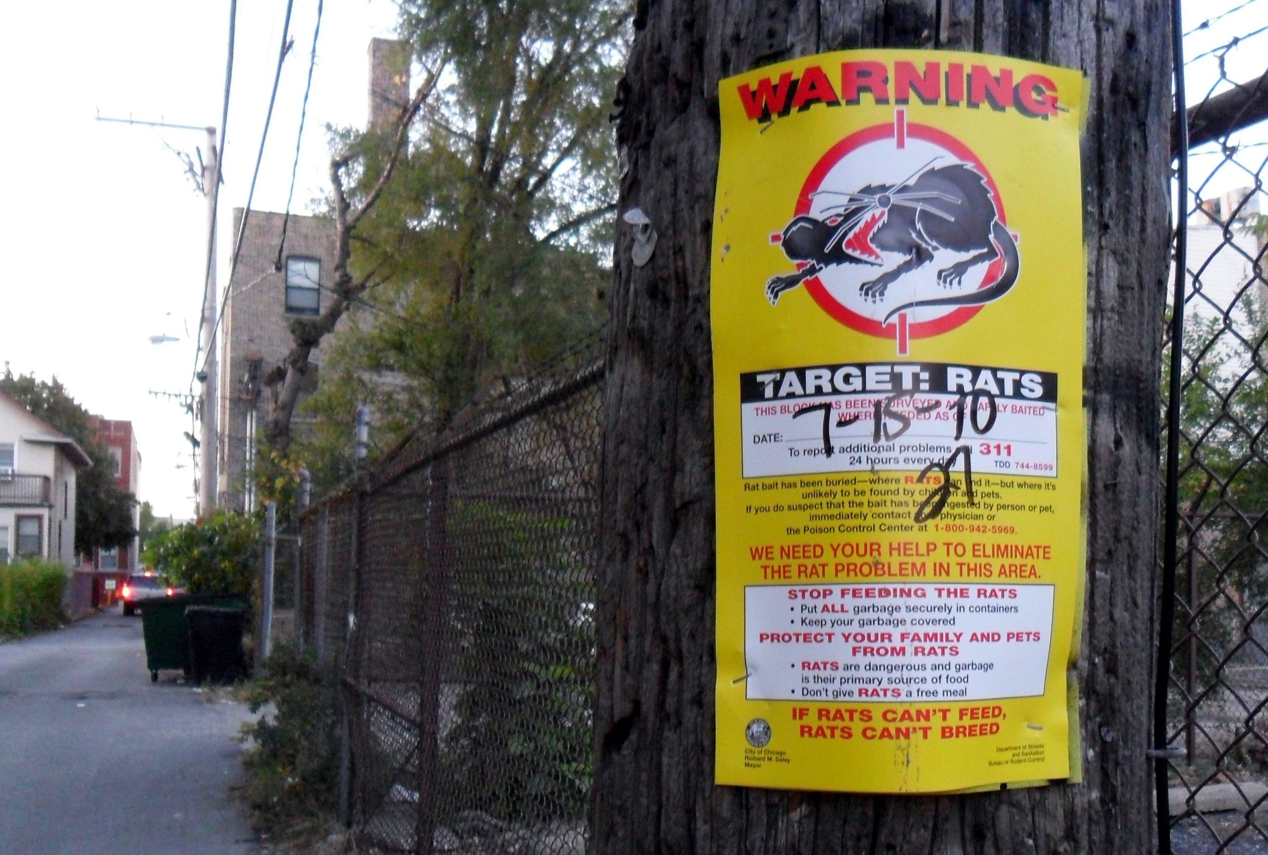 chicago alleys rats poster